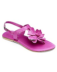 Emotion Flower Toepost Sandals EEE Fit