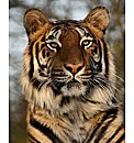 Big Cat Encounter Weekends