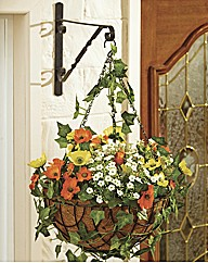 Poppy Hanging Basket