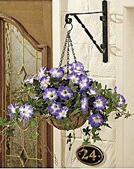 Petunia Small Hanging Basket