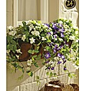 Petunia Window Box Planter