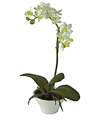 Faux Orchid Plant with White Pot