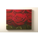 Red Rose Row Printed Canvas