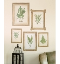 Fern Pictures Pack of 5