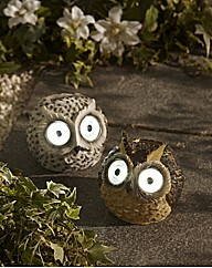 Owl Spotlight Set of Two