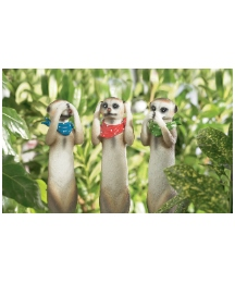 Three Meerkats on Stakes