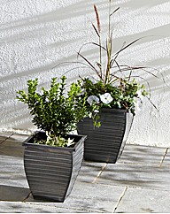 Set of Two Zinc Planters