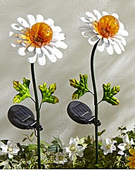 Set of Two Daisy Stakelights