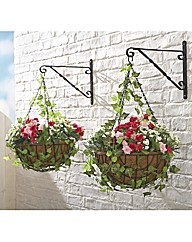 Ready Made Hanging Basket