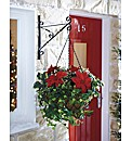 Poinsettia Christmas Hanging Basket