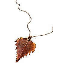 Large Iridescent Birch Leaf Necklace