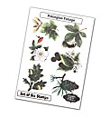 Stamps Away Collection - Foliage Stamps