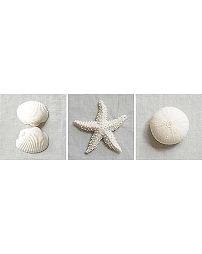 Arthouse White Shells and Starfish